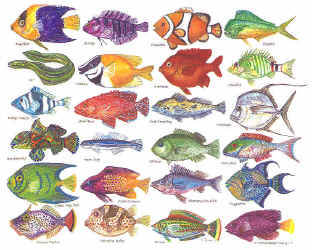 Types of saltwater fish - photo#25