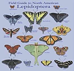 Kaufman field guide to butterflies of north america the compleat.