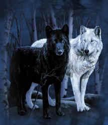 wolves of the forest BlackAndWhiteWolvesAJ211