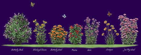 Butterfly Nectar Plants Species Comparing Morphology, Shape, Leaves, And  Butterfly Details