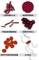 Waterborne pathogens infectious awareables microbe bacteria virus