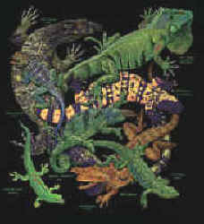 4e9958bad Lizard TShirts for adults and children